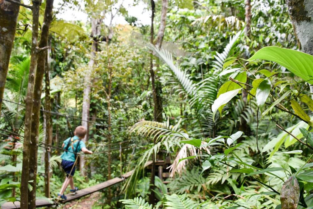 Guadeloupe Sehenswürdigkeiten Highlights Reisetipps Le Tapeur Seilpark