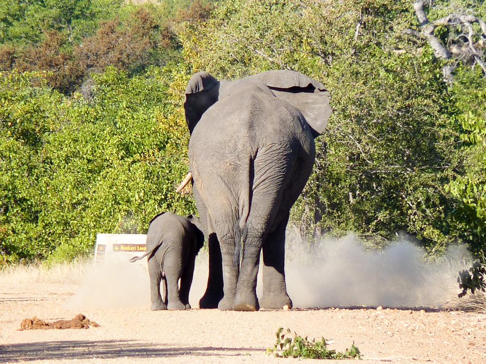Reisen verändert Travel Sisi Elefanten im Krüger Nationalpark