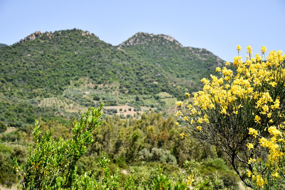 Sardinien Ostküste Reisetipps Highlights Restaurants wunderbare Natur