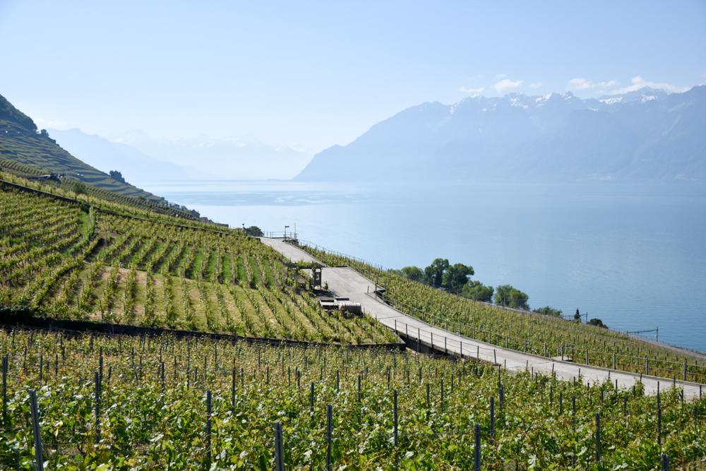 Travel Sisi Grand Tour of Switzerland mit Kind Lavaux
