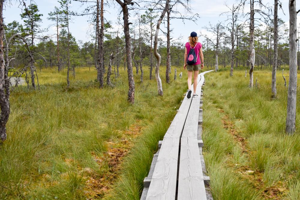 Estland Road Trip Reisetipps Route Highlights Bohlenweg im Soomaa Nationalpark