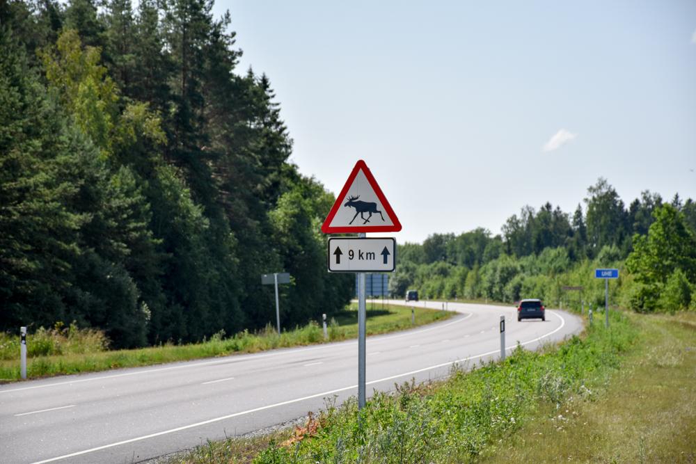 Estland Road Trip Reisetipps Route Highlights Elch Warnschild auf der Strasse