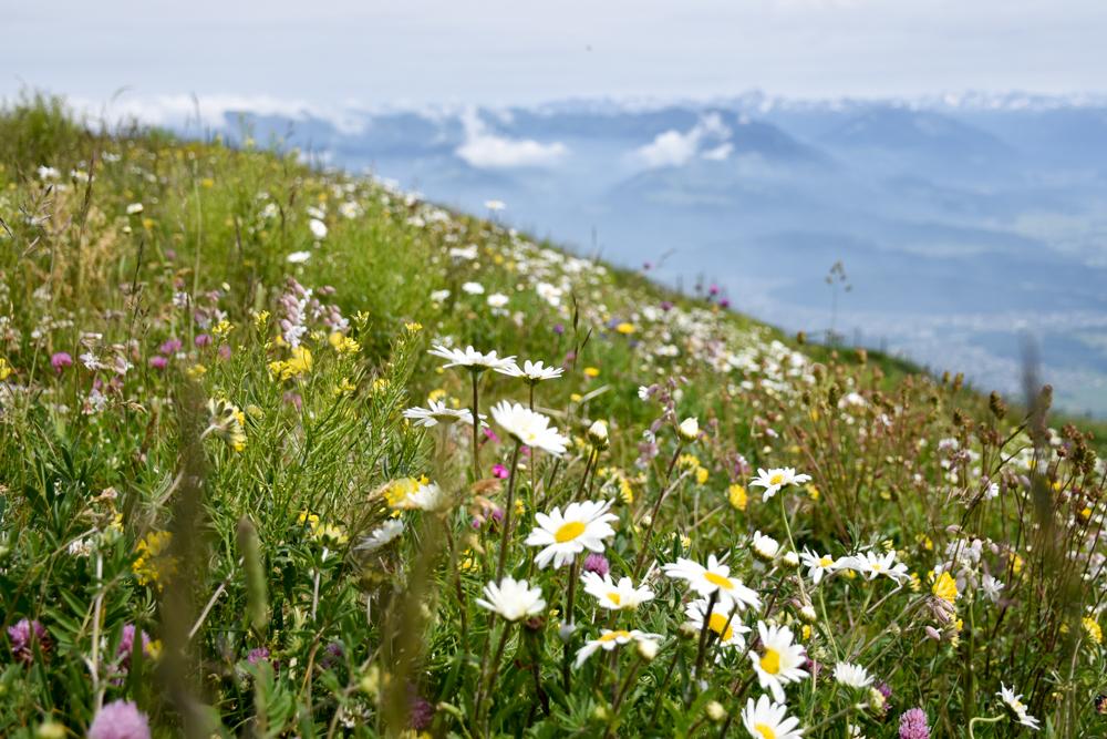 Familienausflug Hoher Kasten Appenzell Schweiz Alpengarten