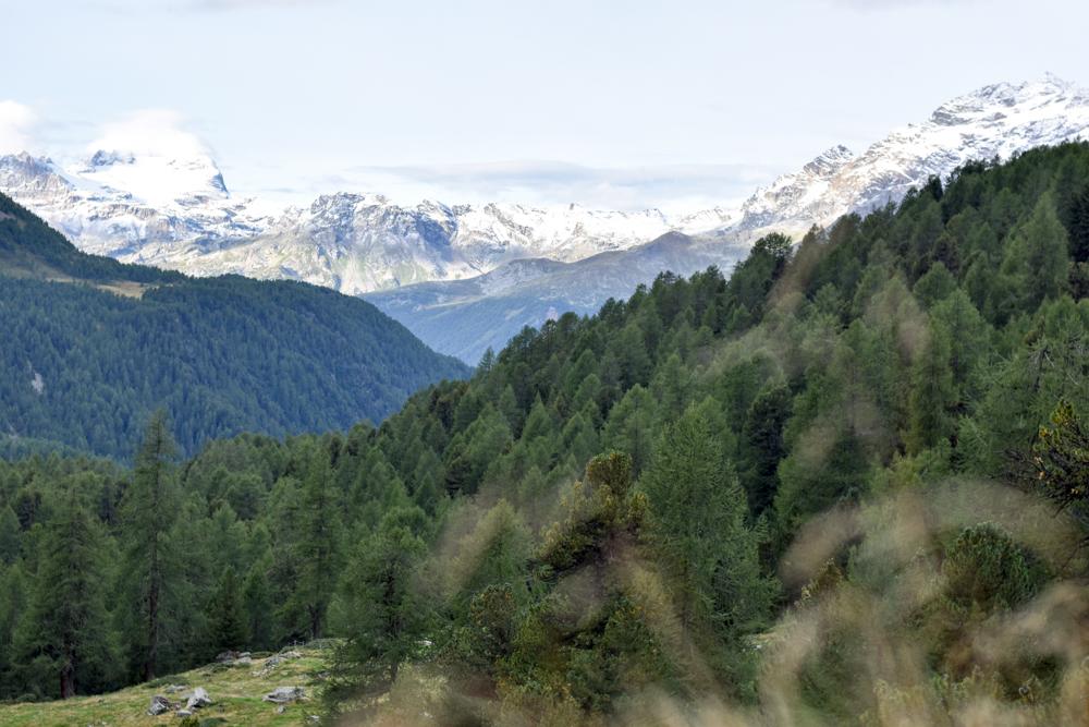 Weekend in der Valposchiavo Graubünden Schweiz Rundwanderung Blick durch das Val di Campo