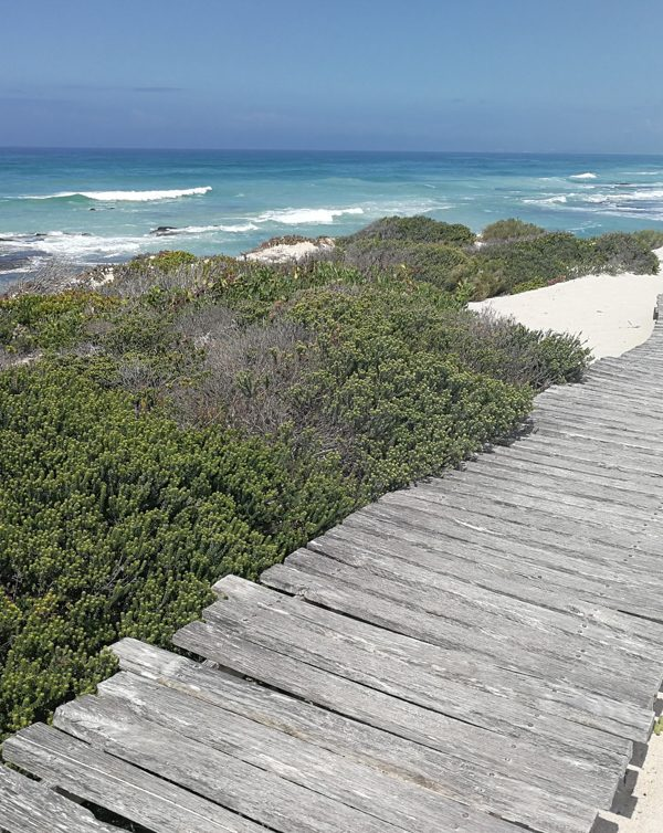 De Hoop Nature Reserve: Natur pur in Südafrika