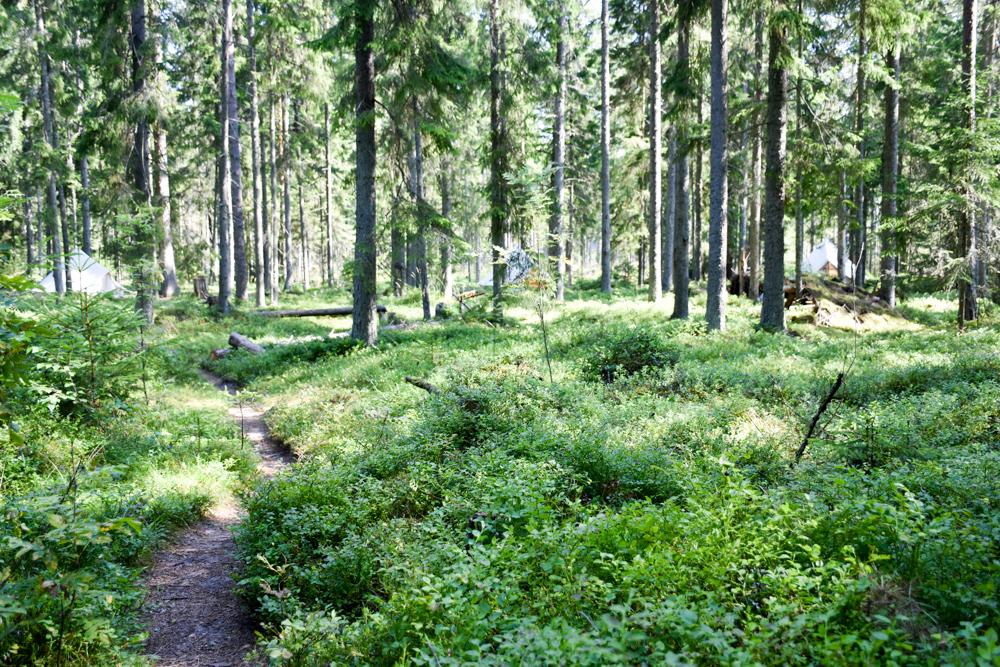 Glamping Lahemaa Nationalpark Estland Projekt Kodu Zelte im Wald