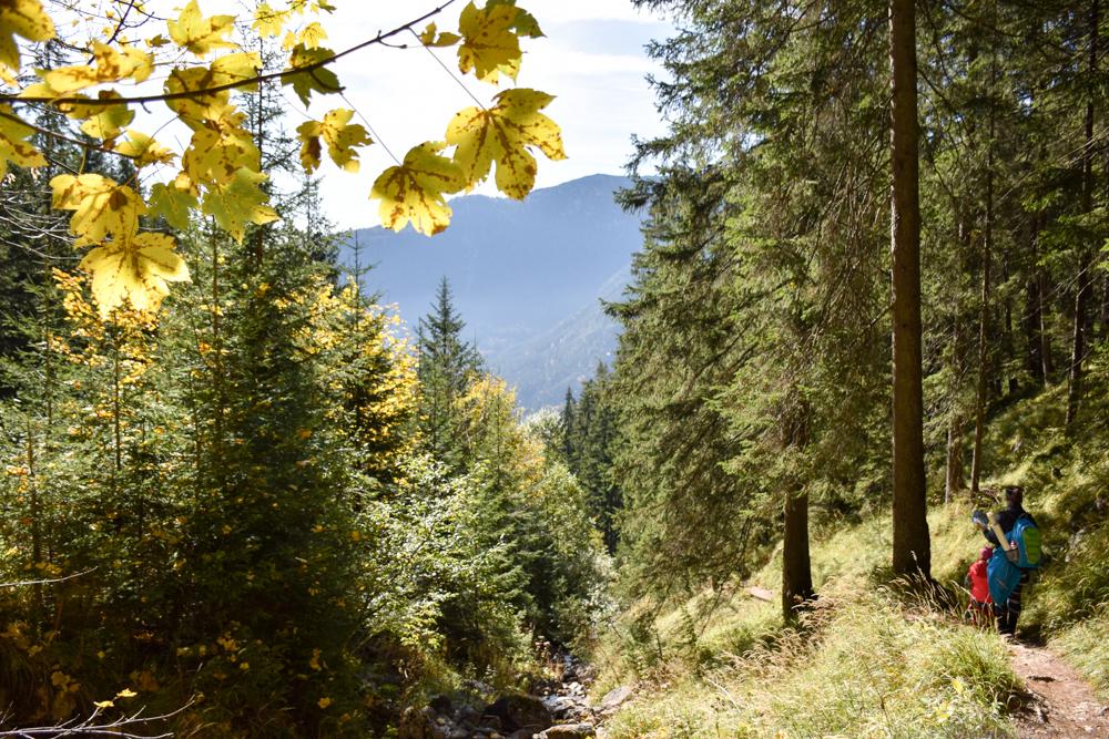 Herbstferien Achensee Tirol Österreich mit Kindern Wanderung durch den Herbstwald