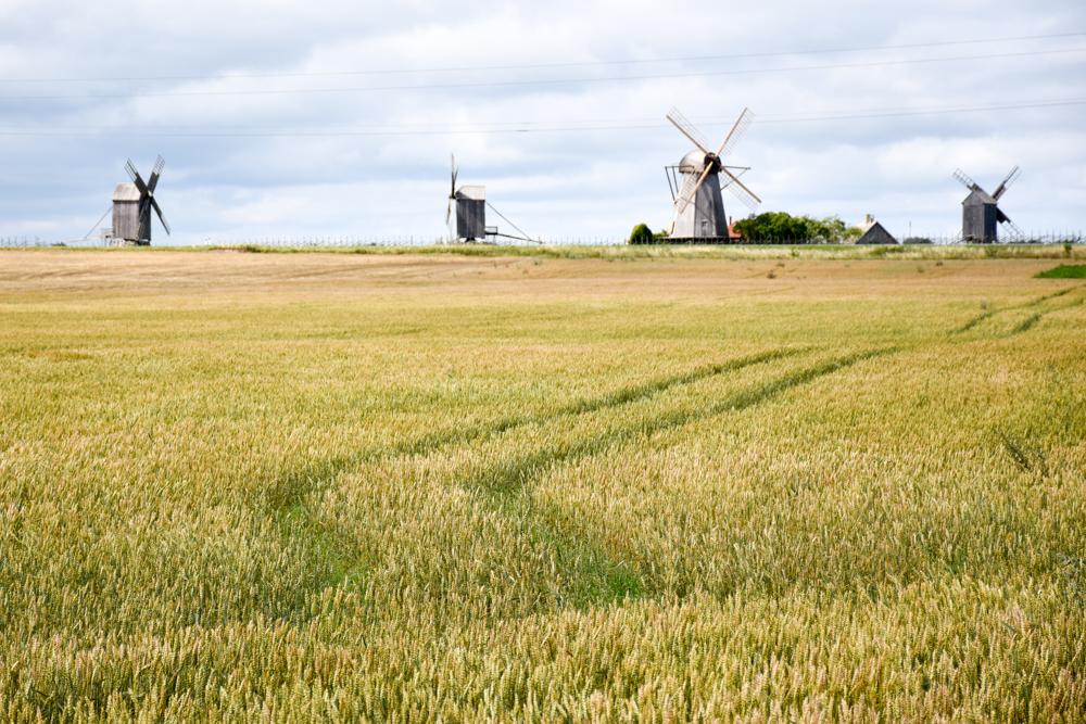 Insel Muhu Estland Mühlenberg Angla Saaremaa