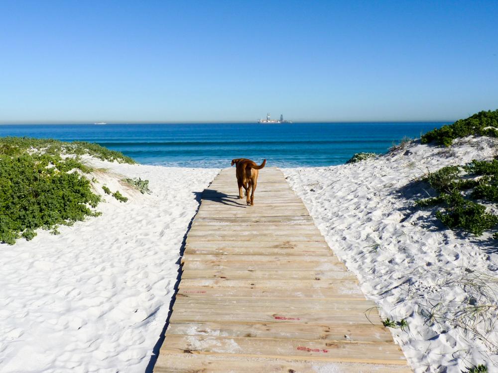 Auswanderung nach Südafrika Bloubergstrand mit Hund