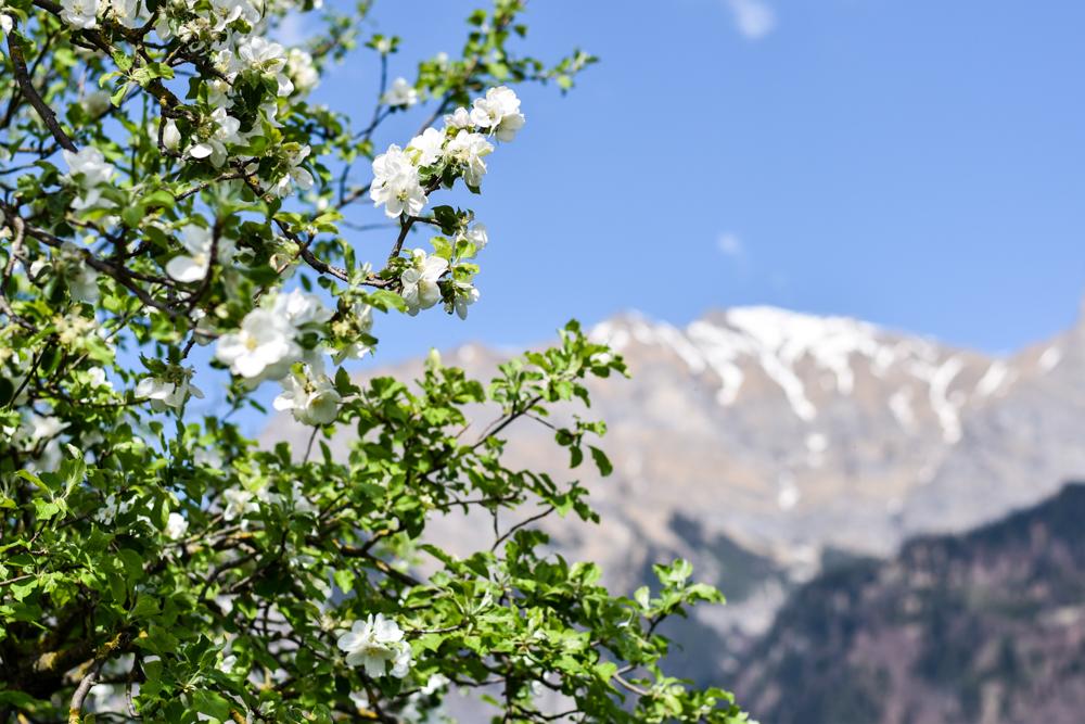 Das Positive der Coronakrise Falknis über Maienfeld Graubünden