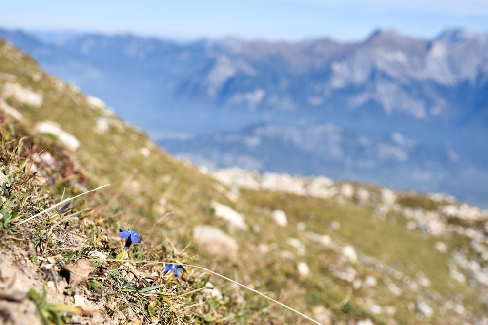 5-Seen-Wanderung Pizol Heidiland St. Gallen Schweiz schöne Blumen auf der Wanderung