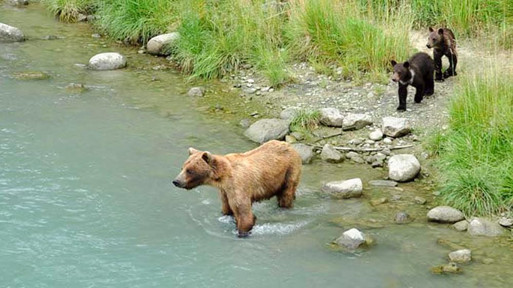 Weltreise im Camper Weg auf Zeit Bären