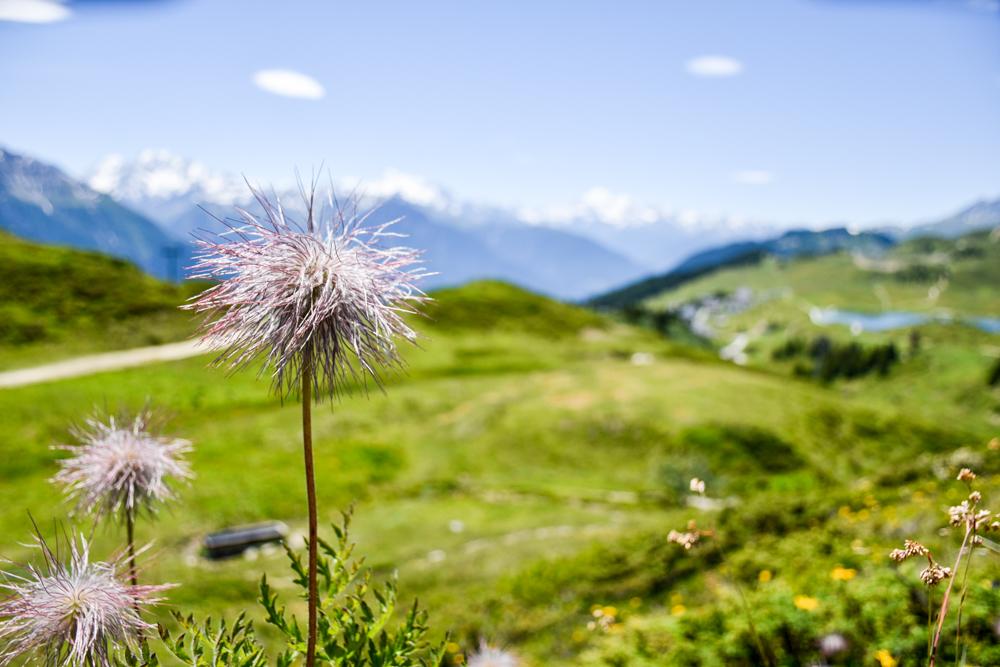 Familienwochenende Aletsch Arena Wallis Schweiz wunderbare Natur und Aussicht Herrenweg