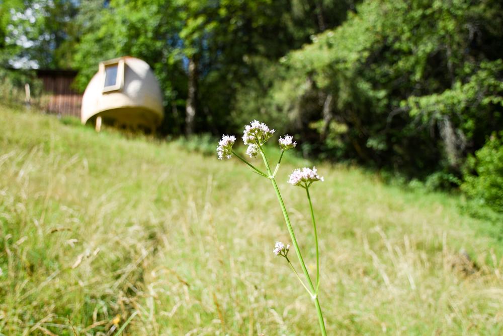 Unterkunft Berner Oberland Schweiz Bienenkorb Jugendherberge Grindelwald Blumenwiese und Blick auf die Unterkunft
