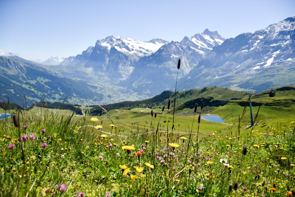 Familienausflug Lieselotteweg Männlichen Grindelwald Berner Oberland Schweiz Aussicht und Blumenwiesen