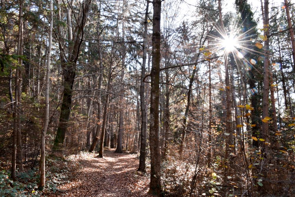 Ausflugstipp Walderlebnispfad Vaduz Liechtenstein unterwegs im Wald