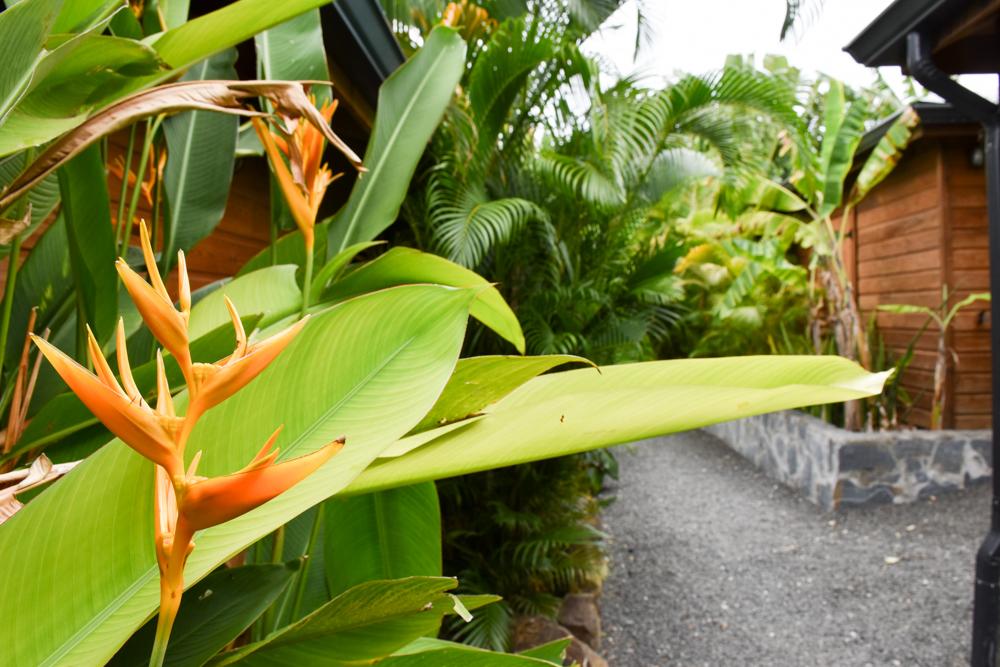 Beste Unterkunft Guadeloupe Grande-Terre Iguana Ecolodge Saint-Francois tropischer Garten