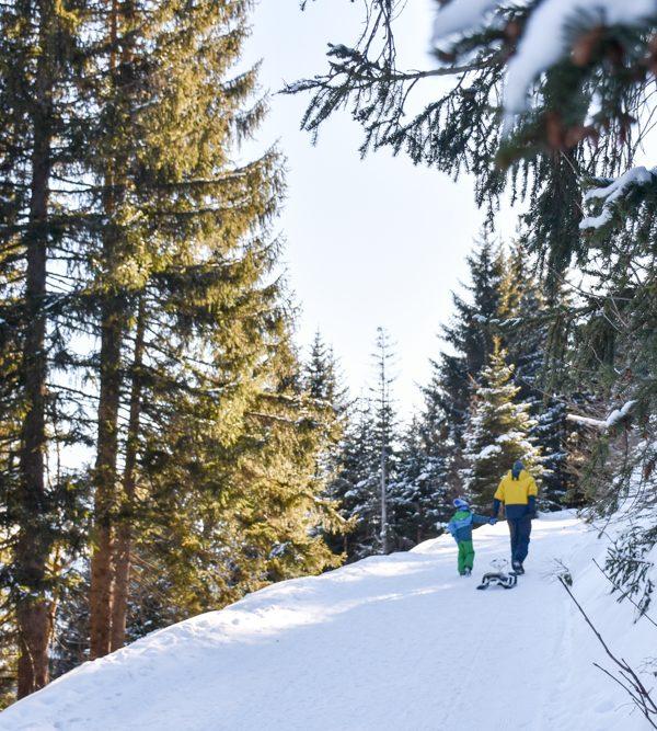 Ausflugstipp Edelweiss-Rundweg Brambrüesch: Familienfreundliche Winterwanderung in Graubünden