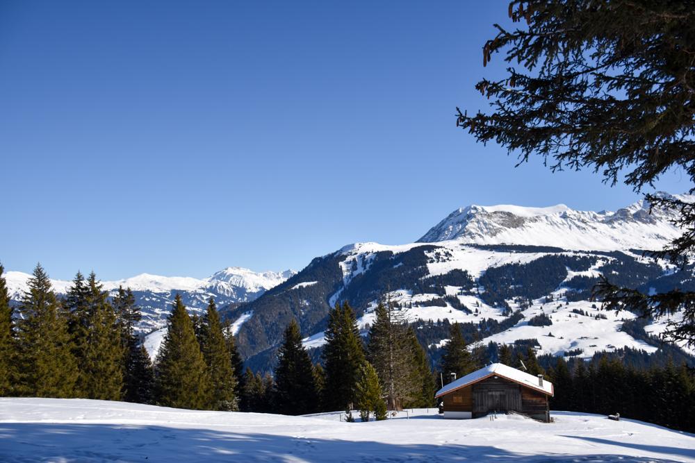 Winterwanderung Edelweiss-Rundweg Brambrüesch Graubünden Schweiz Blick über die verschneite Winterlandschaft