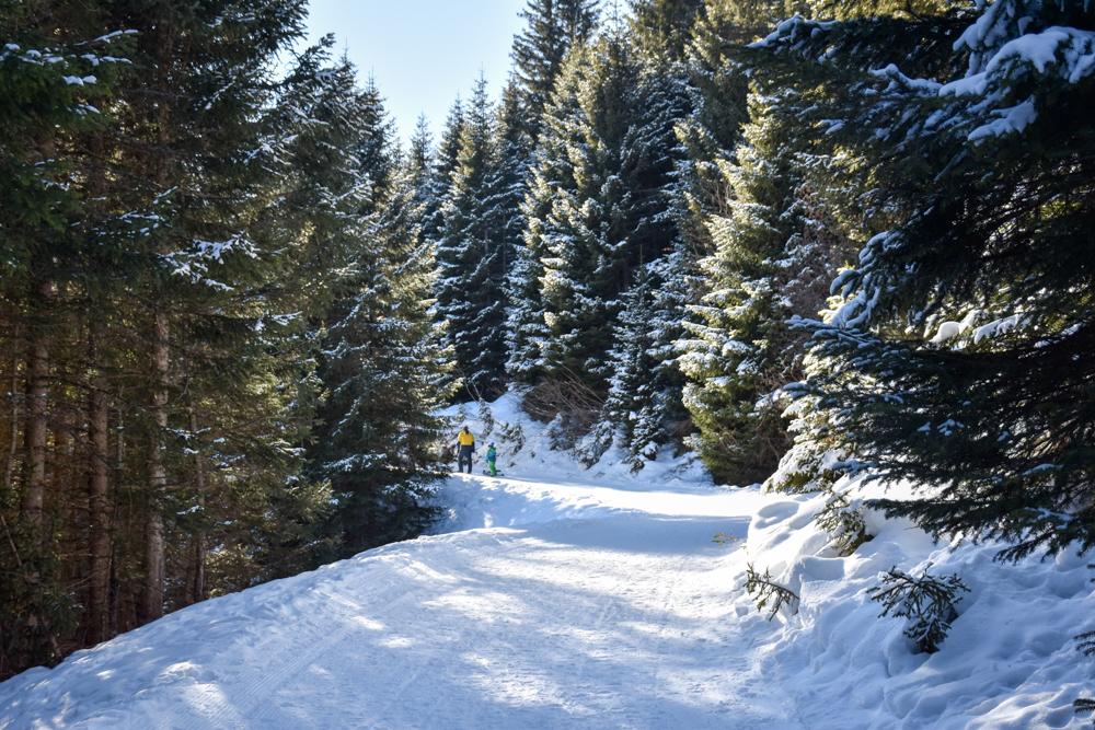 Winterwanderung Edelweiss-Rundweg Brambrüesch Graubünden Schweiz verschneite Winterlandschaft