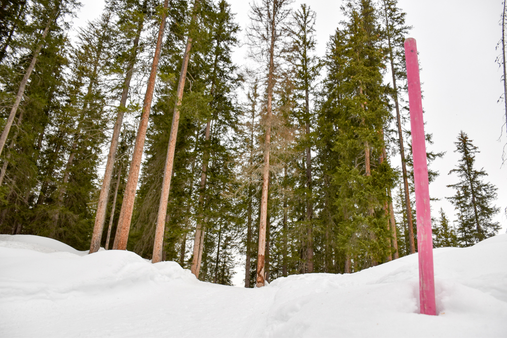 Ausflugstipp Winterwanderung Panoramaweg St. Antönien Pany Prättigau Graubünden Schweiz Waldstück
