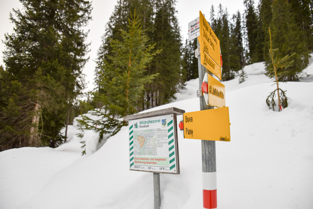 Ausflugstipp Winterwanderung Panoramaweg St. Antönien Pany Prättigau Graubünden Schweiz Wildruhezone