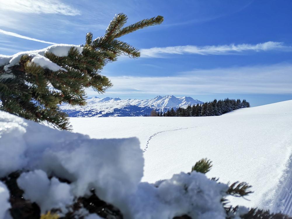 Winterwanderung Rundweg Feldis Viamala Graubünden Schweiz verschneite Tannen und herrlicher Ausblick