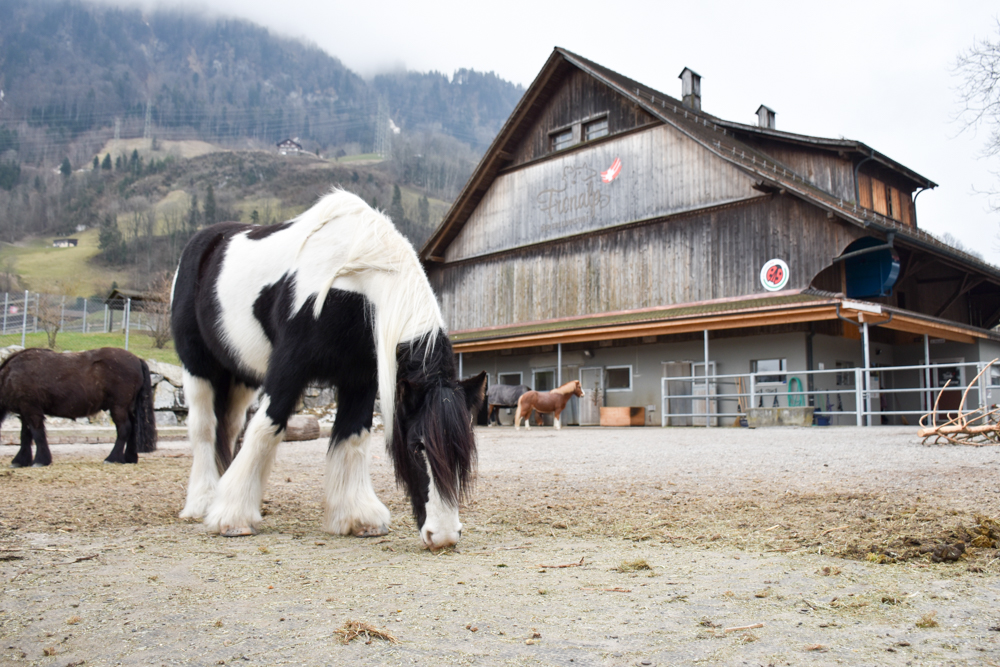 Unterkunft Reka-Ferienresort Swiss Holiday Park Morschach Schwyz Schweiz Erlebnishof Fronalp