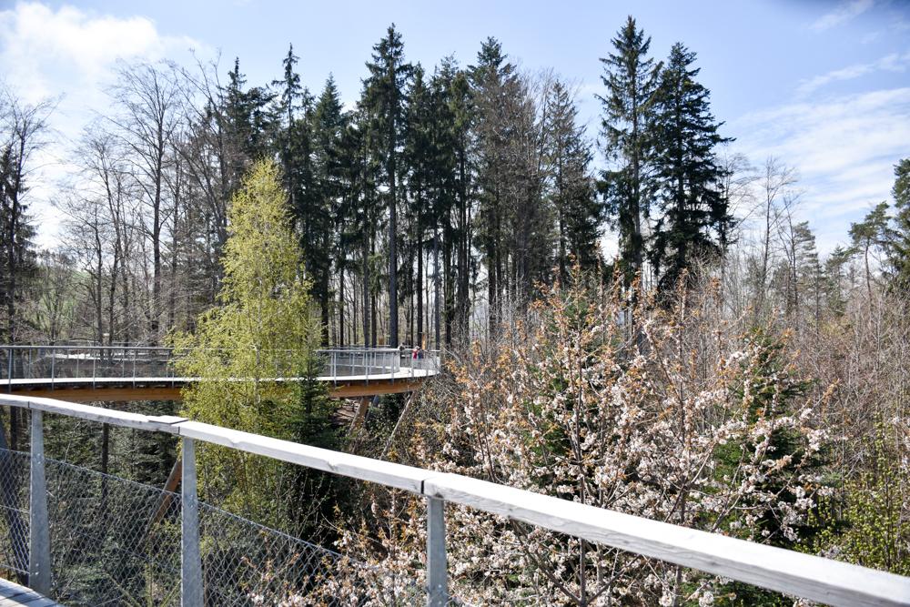 Ausflugstipp Ostschweiz Baumwipfelpfad Neckertal Maestranis Chocolarium Toggenburg mitten im Wald