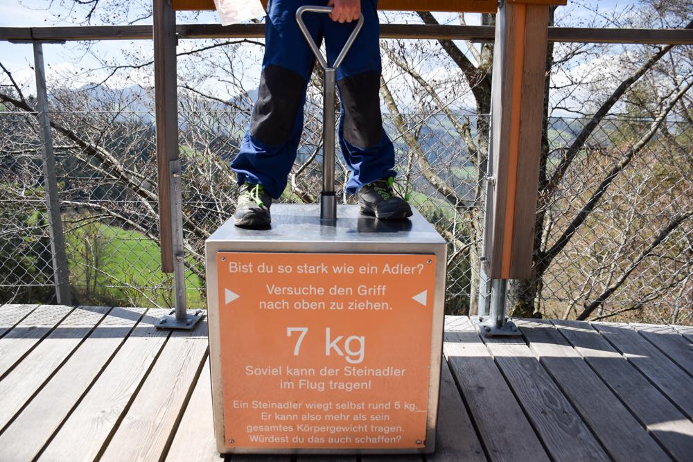 Ausflugstipp Ostschweiz Baumwipfelpfad Neckertal Maestranis Chocolarium Toggenburg stark wie ein Adler