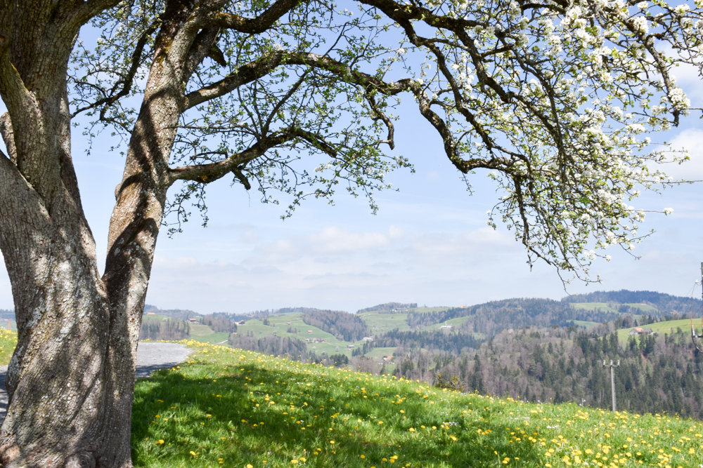 Ausflugstipp Ostschweiz Baumwipfelpfad Neckertal Maestranis Chocolarium Aussicht übers Toggenburg