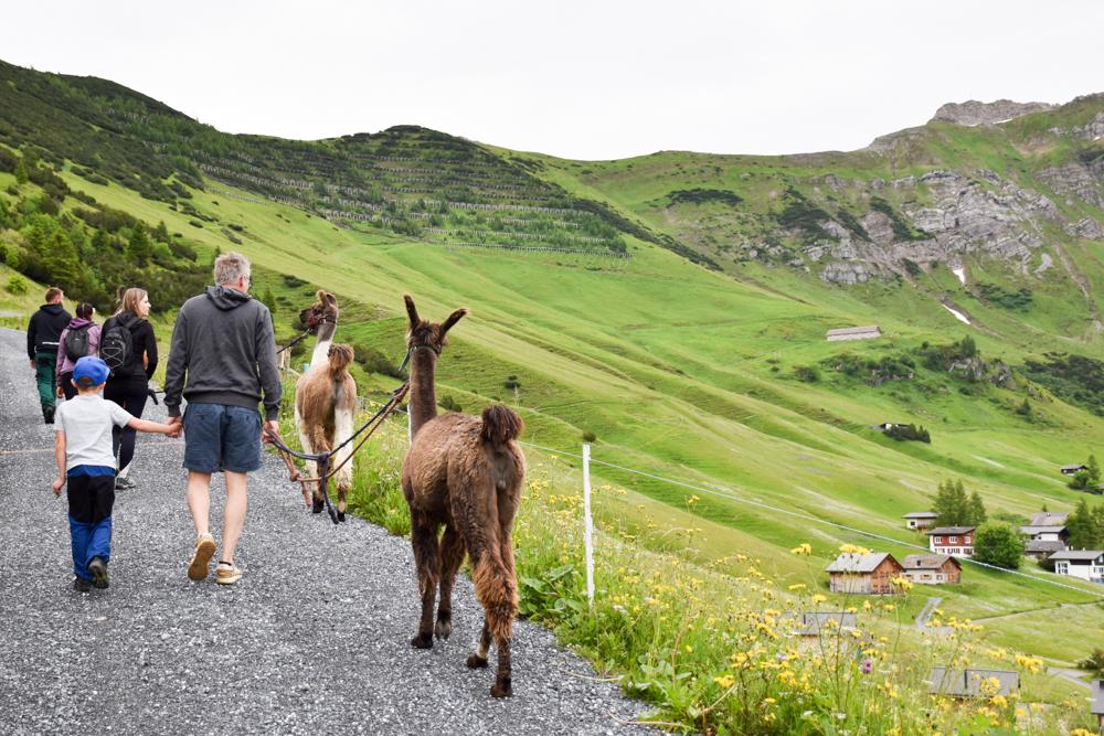 Lamatrekking Tipi Übernachtung Liechtenstein Panoramawanderung rund um Malbun