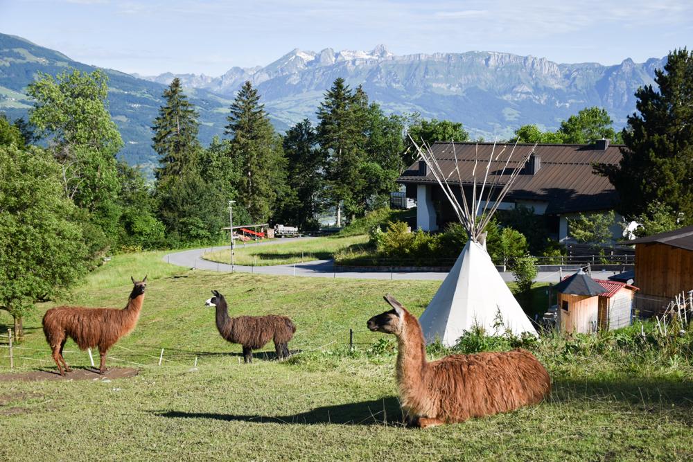 Lamatrekking Tipi Übernachtung Liechtenstein Tipi und Lamas mit Blick aufs Rheintal