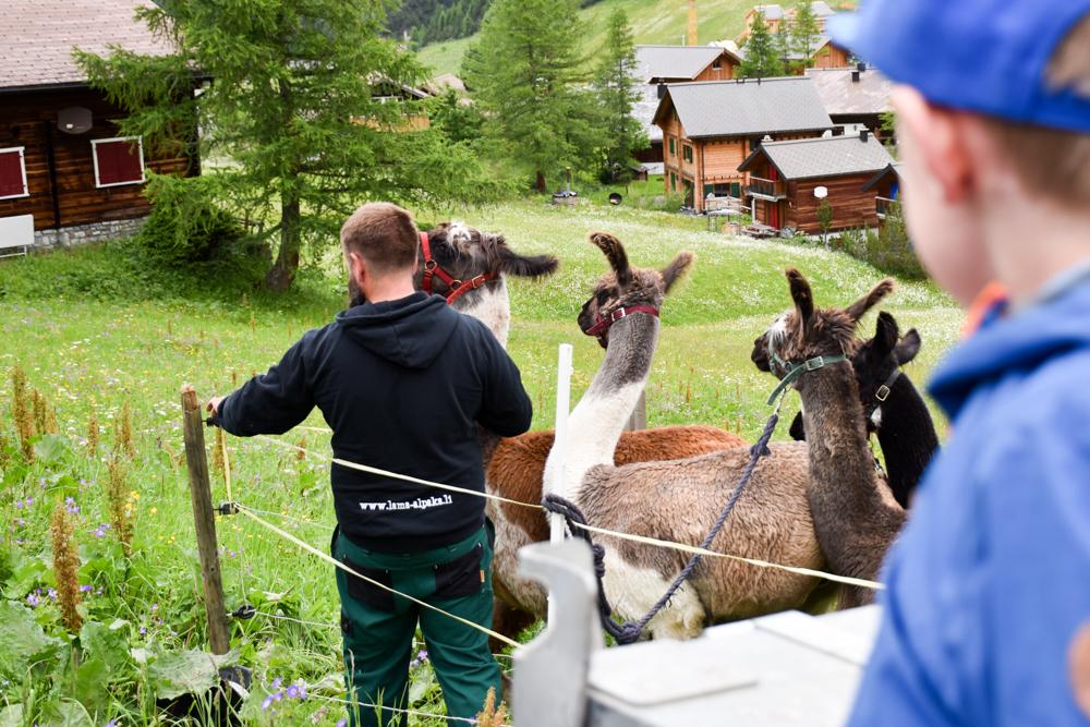 Lamatrekking Tipi Übernachtung Liechtenstein Vorbereitungen Trekking