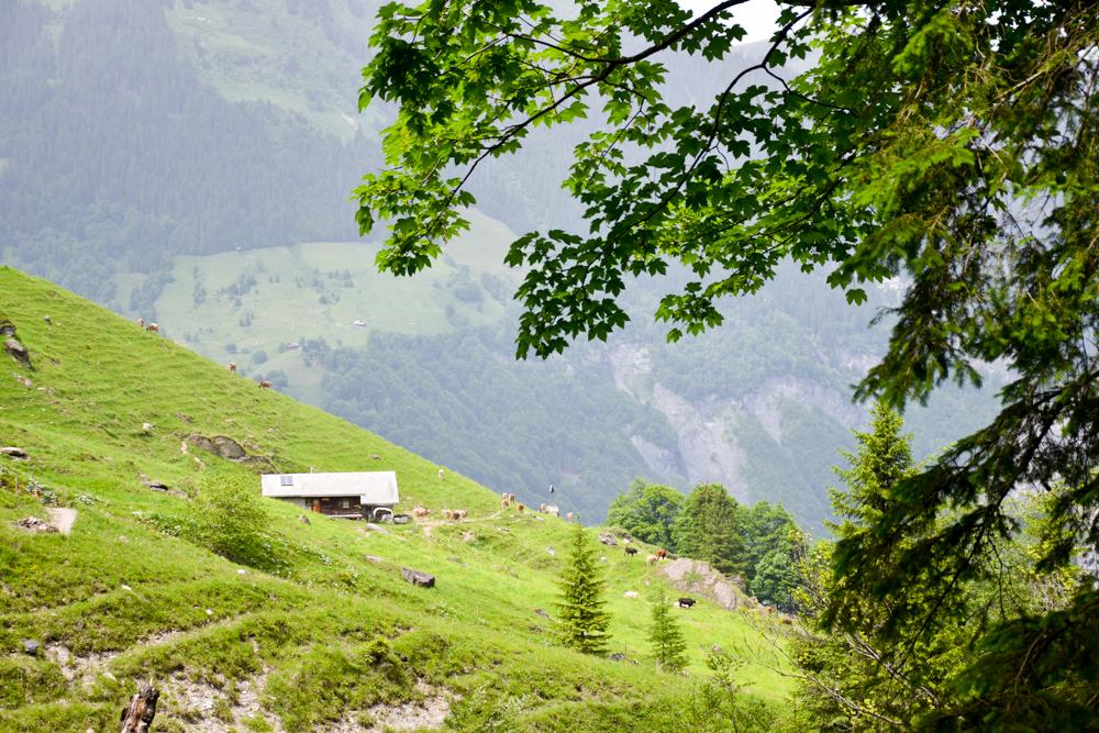 Ausflugstipp Wanderung Wasserfallarena Batöni Heidiland Schweiz Alp