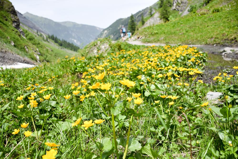 Ausflugstipp Wanderung Wasserfallarena Batöni Heidiland Schweiz Alpenblumen