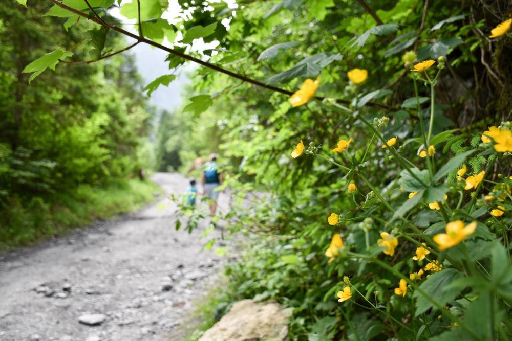Ausflugstipp Wanderung Wasserfallarena Batöni Heidiland Schweiz Aufstieg im Wald