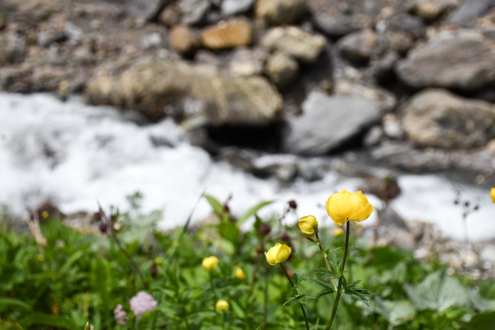 Ausflugstipp Wanderung Wasserfallarena Batöni Heidiland Schweiz Bach und Alpenblume