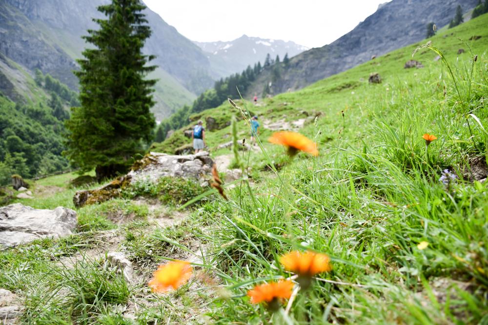 Ausflugstipp Wanderung Wasserfallarena Batöni Heidiland Schweiz blühende Alpenwiesen