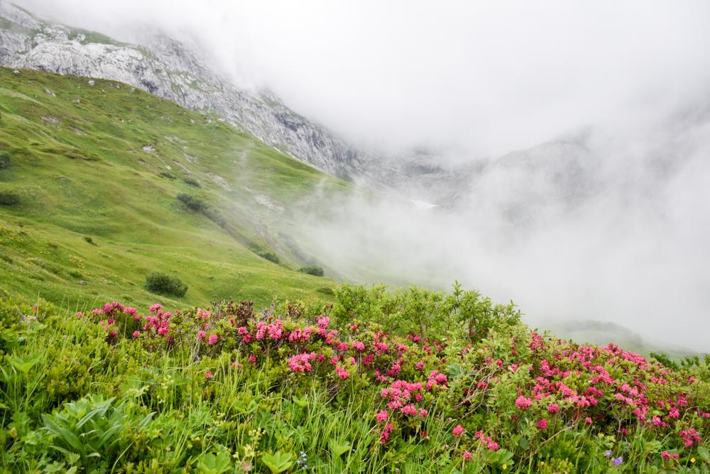 Carschinahütte SAC mit Kindern Prättigau Graubünden Schweiz Alpenrosen und Nebel beim Partnunsee