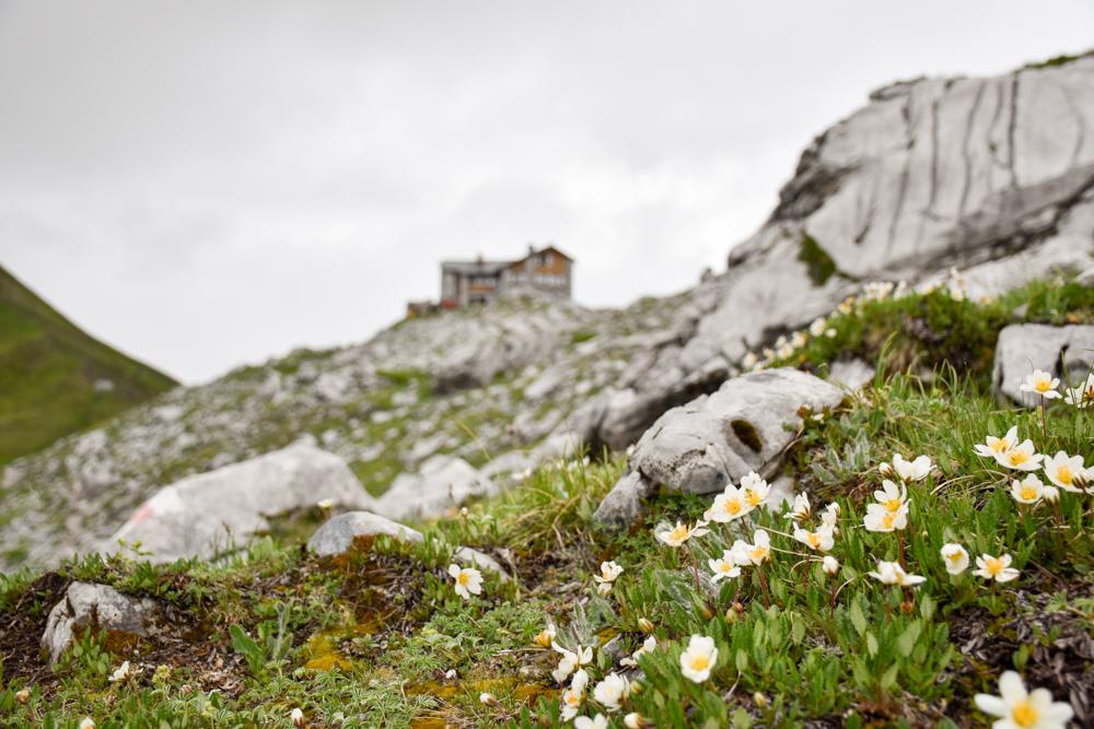 Carschinahütte SAC mit Kindern Prättigau Graubünden Schweiz Blumen und Berghütte